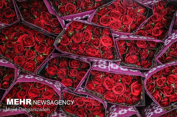 پرورش گل در کویر- عکس