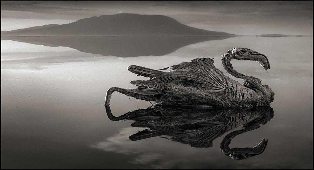 باور کنید تصاویر این دریاچه واقعی است+عکس