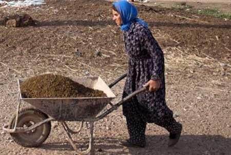 واردات عجیب لاستیک فرغون به ایران+عکس